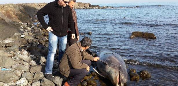 Karadeniz'de şok görüntü!