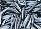 Balık fiyatları altınla yarışıyor!
