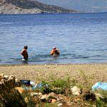 Bodrum sahilinde ölü fok bulundu