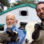 Et krizini bu koyunlar çözecek