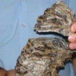 Türkiye'de bulundu: Tam 2,5 milyon yıllık...