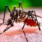 Komşuda sıtma alarmı!