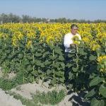 Konya Şeker'den ithal ayçiçeğinin yüzde 10 üstünde fiyat