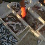 Marmara ve Kuzey Ege Denizi'nde kirlilik incelemeleri