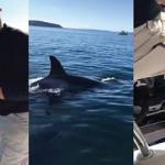 Fok balığı canını kurtarmak için tekneye atladı