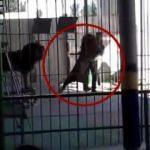 Sirkte dehşet! Aslan terbiyecisinin boynunu kaptı!