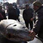 Türkiye Norveç'e balık yağı satıyor
