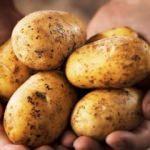 Patates ile tek tip beslenerek kilo verilir mi?