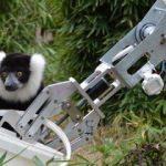 GÖKTÜRKLER'in robotu lemur besledi