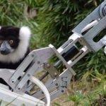 GÖKTÜRK'lerin robotu lemurları besledi!