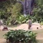 Dehşet! Zebra bakıcının kolunu ısırıp...