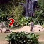 Dehşet! Zebra bakıcısının kolunu ısırdı ve...