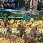 Bu ülkede insanlar yatıyor maymunlar çalışıyor!