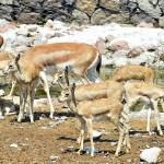 İzmir Doğal Yaşam'ın yeni yavruları
