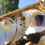 Arıcılar bu sene bal üretiminde rekor bekliyor