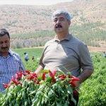 Gaziantep biber üretiminde söz sahibi olacak
