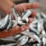 Balıkçıların gözü 1 Eylül'de