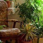 Evde çiçek yetiştirmenin püf noktaları