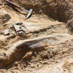 ABD'de bir dinozora ait iskelet bulundu!