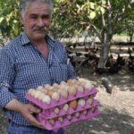 Düğünde duyduğu fikirle tavuk çiftliği kurdu