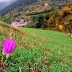 Tarihi İpek Yolu'nda sonbahar bir başka güzel
