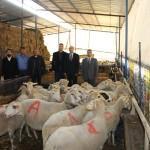 Bandırma'da hükümlüler iş sahibi oldu