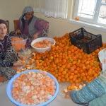 Akdeniz'in mandalinasını Sultandağlı kadınlar soyuyor