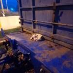 Vagon üzerinde konteynere bağlı köpek bulundu