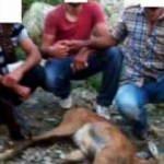 Kaçak avcıları paylaştıkları fotoğraf ele verdi