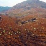 Yanan ormanların yeşille buluşması görüntülendi