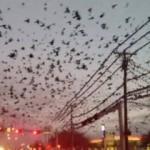 Şehri istila ettiler! ABD'de ürküten görüntü!