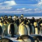 1,5 milyonluk yeni penguen sürüsü keşfedildi