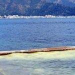 Deniz kıyısı polenle kaplandı