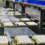 1 Nisan'da başlıyor! Artık her yumurtada olacak