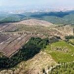 İzmir ve Manisa'da 7 milyon fidan dikildi