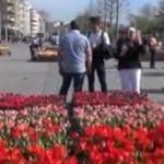 Taksim Meydanı'na binlerce lale dikildi