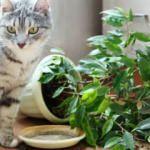 Kediler bitkilerden nasıl uzak tutulur?