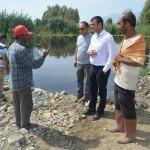 GÜNCELLEME - Aydın'da toplu balık ölümleri