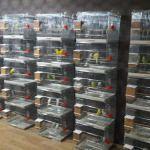 Sakarya'da kuş ve evcil hayvan malzemesi hırsızlığı