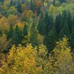 Geri dönüşümle 15 ayda 30 milyon ağaç kurtarıldı