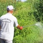 Kırklareli'de haşere ve sineklere karşı ilaçlama