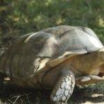 Darıca'daki hayvanat bahçesi 3 bin 600 hayvana ev sahipliği yapıyor