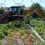 Burdur'da kaçak sera bahçesi yıkıldı