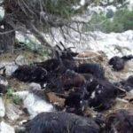 Isparta'da yıldırım düştü: 31 keçi telef oldu
