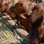 """Bakanlıktan """"canlı hayvan ithalatı"""" açıklaması"""