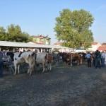 Banaz'da hayvan pazarında hareketlilik