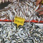 Balıkçılar deniz suyu ve hava sıcaklıklarının düşmesini bekliyor