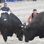 Boğalar spor kulübü yararına güreşti
