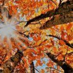 Sonbahar Ekinoksu nedir? 23 Eylül Ekinoksu hakkında bilinmeyen gerçek...
