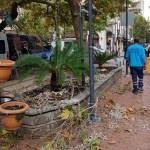 Manisa'da ağaçtan düşen işçi ağır yaralandı